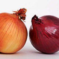 remedios para los mezquinos, remedios caseros para mezquinos, como quitar un mezquino de forma natural, cebolla para mezquinos